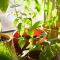 Improve your Home's Air Quality with Indoor Plants